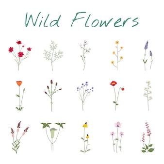 Ustaw zbiór dzikich kwiatów ilustracji