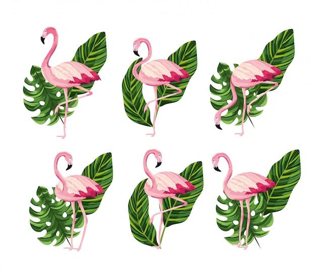 Ustaw zwierząt flamingów z tropikalnych liści
