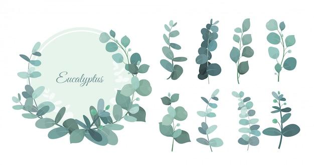 Ustawić liście eukaliptusa, gałęzie. śliczne zioła do ślubnej zieleni, elementy dekoracyjne na zaproszenia i kartki z życzeniami. niebieski wieniec eukaliptusowy, liście i łodygi w płaski.