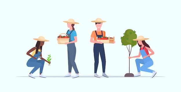 Ustawić ogrodników pracujących w hrabstwie ogrodowym lub szklarniowym mężczyzn kobiet pracowników rolnych, którzy zbierają ogrodnictwo koncepcja ekologicznej uprawy pełnej długości poziomej
