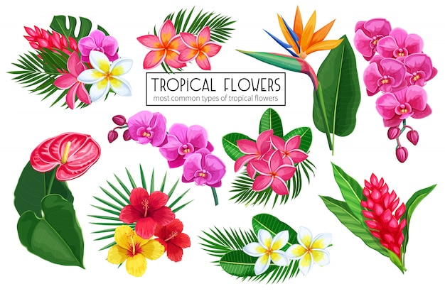Ustawić tropikalne kwiaty