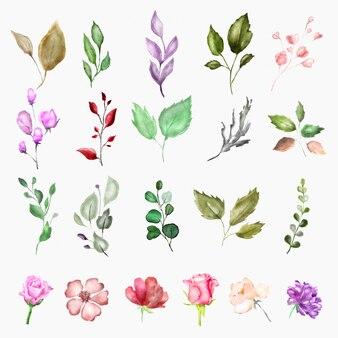 Vintage akwarela elementy kwiatowe