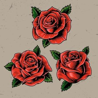 Vintage czerwone kwitnące róże koncepcja