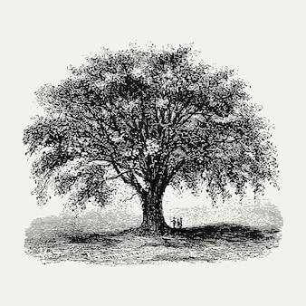 Vintage drzewo ilustracja