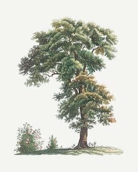 Vintage drzewo rysunek
