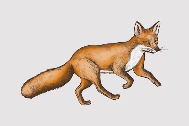 Vintage futrzany brązowy lis