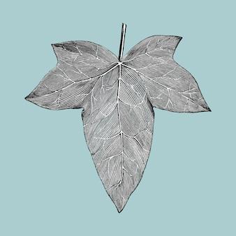 Vintage ilustracja liść