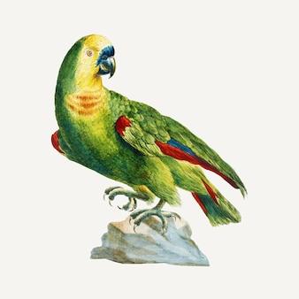 Vintage ilustracja papuga