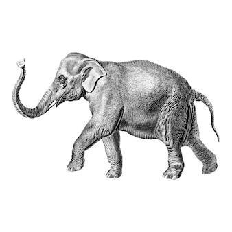 Vintage ilustracje słonia