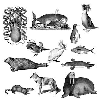 Vintage ilustracje zwierząt
