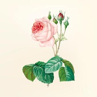 Vintage ilustracji kwiatów