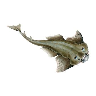 Vintage ilustracji ryb