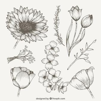 Vintage kolekcja wiosna dzikie kwiaty