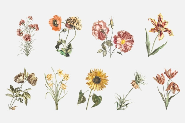 Vintage kwiat wektor ręcznie rysowane zestaw ilustracji