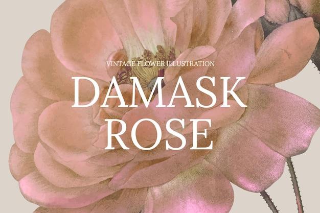 Vintage kwiatowy szablon ilustracji wektorowych z różą adamaszkową w tle, zremiksowany z dzieł z domeny publicznej