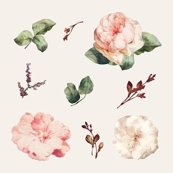 Vintage kwiatowy zestaw ilustracji wektor zestaw