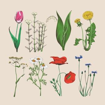 Vintage kwiaty i zioła