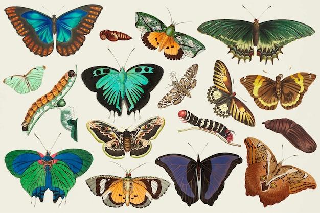Vintage motyl wektor kolorowy zestaw ilustracji