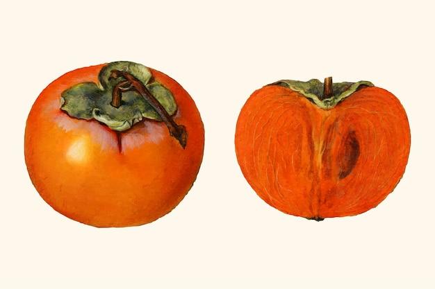 Vintage persimmon ilustracja