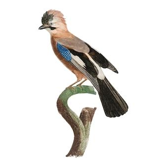Vintage ptak ilustracja