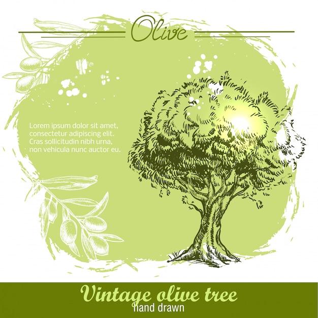 Vintage ręcznie rysowane drzewo oliwne i gałązka oliwna na akwareli