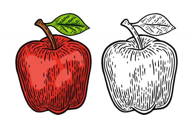 Vintage retro świeże jabłko na białym tle ilustracji wektorowych element projektu.