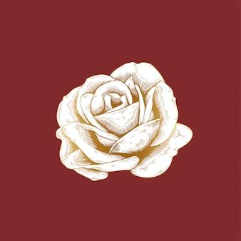Vintage róża rysunek