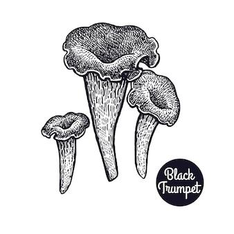 Vintage ryciny grzyb czarny trąbka.