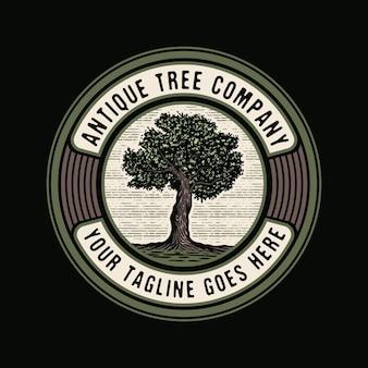 Vintage stary dąb mocne drzewo