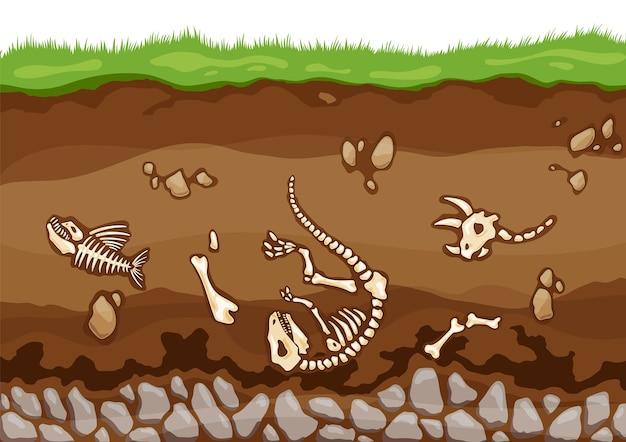 Warstwy gleby z kośćmi.