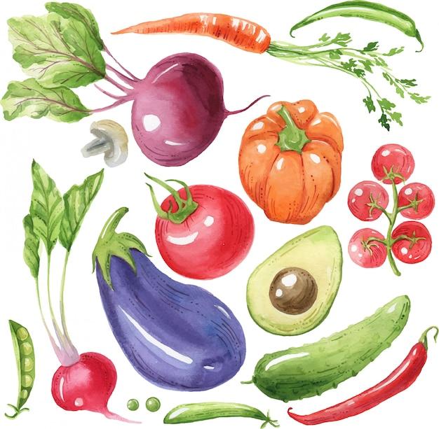 Warzywa akwarela bakłażan, pomidor, papryka, awokado, marchew. ekologiczne jedzenie, zdrowe jedzenie. dania wegańskie. ręcznie malowane ilustracja.