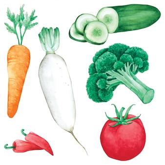 Warzywa ustawić ręcznie farby w akwareli