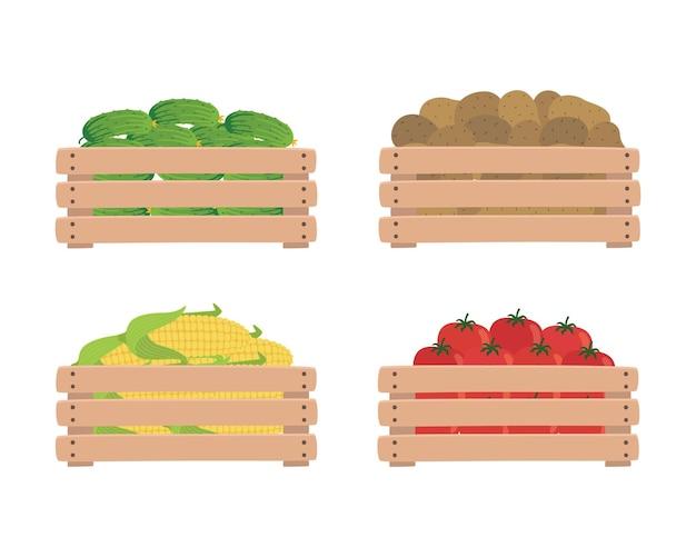 Warzywa w drewnianych pudełkach, na białym tle na białym tle. pomidory, ziemniaki, kukurydza i ogórki. ilustracja żywności ekologicznej. świeże warzywa z gospodarstwa.