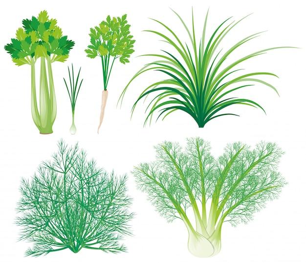 Warzywa z zielonymi liśćmi