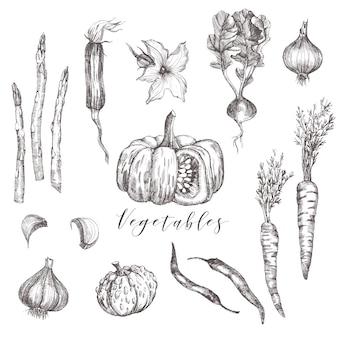 Warzywa zestaw ilustracji szkicu