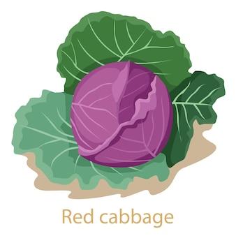 Warzywo czerwona kapusta na białym tle