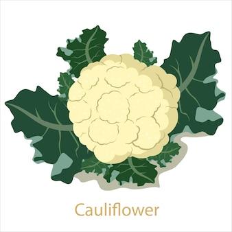 Warzywo kalafior na białym tle