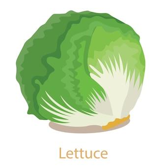 Warzywo sałaty na białym tle