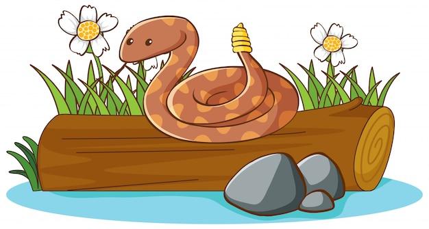 Wąż grzechotka