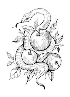 Wąż z jabłkami. ręcznie rysowane ilustracja na białym tle