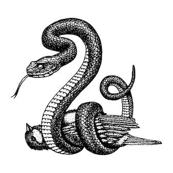 Wąż żmija. kobra wężowa i pyton, anakonda lub żmija królewska. grawerowane ręcznie rysowane w starym szkicu, styl vintage na naklejkę i tatuaż. ophidian i boleń.