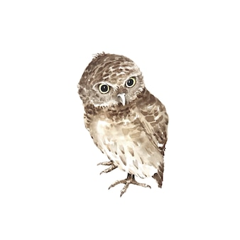 Wektor akwarela ptak brązowa sowa ręcznie malowana