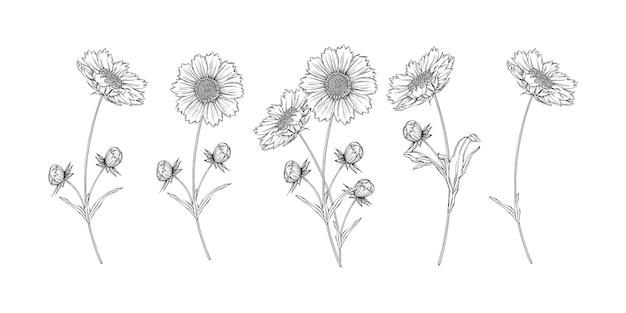 Wektor czarno-biały kontur kwiatów układ z kwiatów rumianku