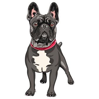 Wektor czarny pies rasy buldog francuski stojący, najczęściej kolorowanie