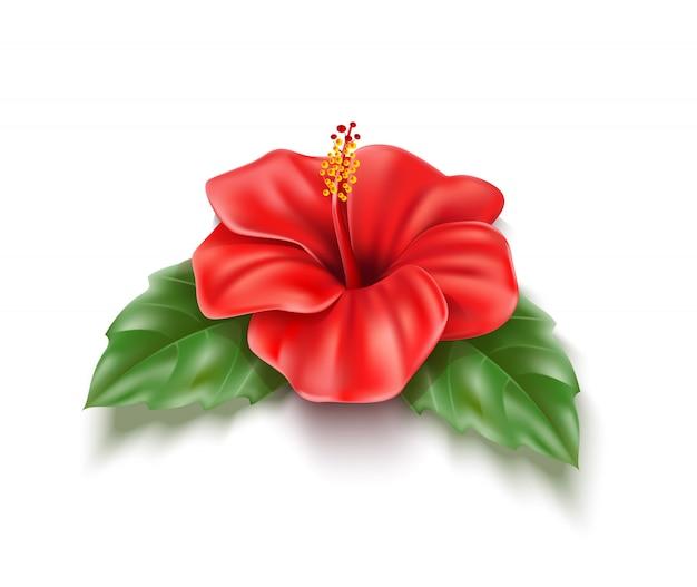 Wektor czerwony kwiat hibiskusa realistyczne tropikalny liść