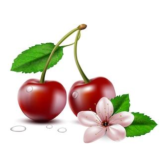 Wektor dwa całe owoce wiśni z łodygą i liśćmi i kwiatem wiśni.