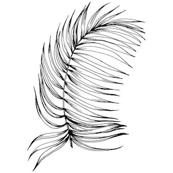 Wektor egzotyczne tropikalne lato hawajskie. palm beach drzewo dżungli botanicznych liści. czarno-biała grawerowana sztuka tuszu. liść roślin ogród botaniczny kwiatowy liści. element ilustracja liść na białym tle.