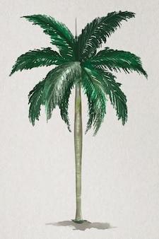 Wektor elementu drzewa palma