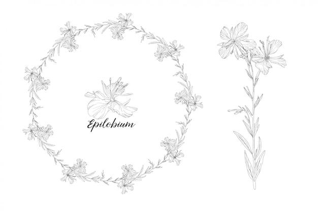Wektor graficzny zestaw elementów kwiatowy. epilobium