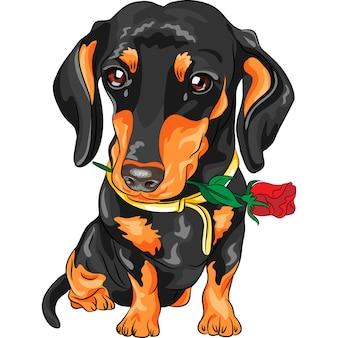 Wektor jamnik pies z czerwonym kwiatem